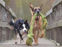 dog rope playing