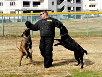 advanced training for dog