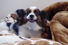 dog in comforter