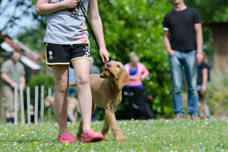 dog school training