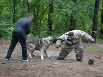 dog responding to command